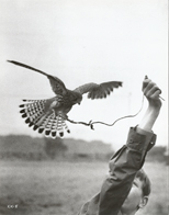original 1969 photograph Billy with Kes