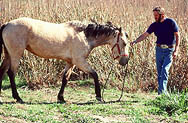 thumbnail link to photograph of Steve in Malibu with horse